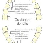 Os Primeiros Dentes – O que Deve Saber