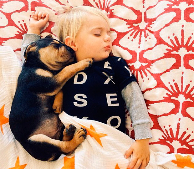 amizade bebe e cao (11)