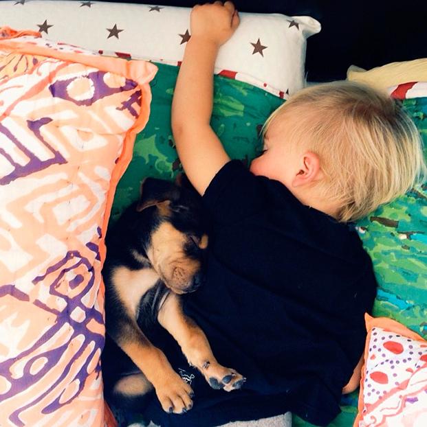 amizade bebe e cao (3)