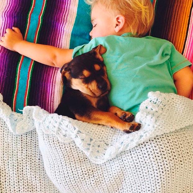 amizade bebe e cao (8)